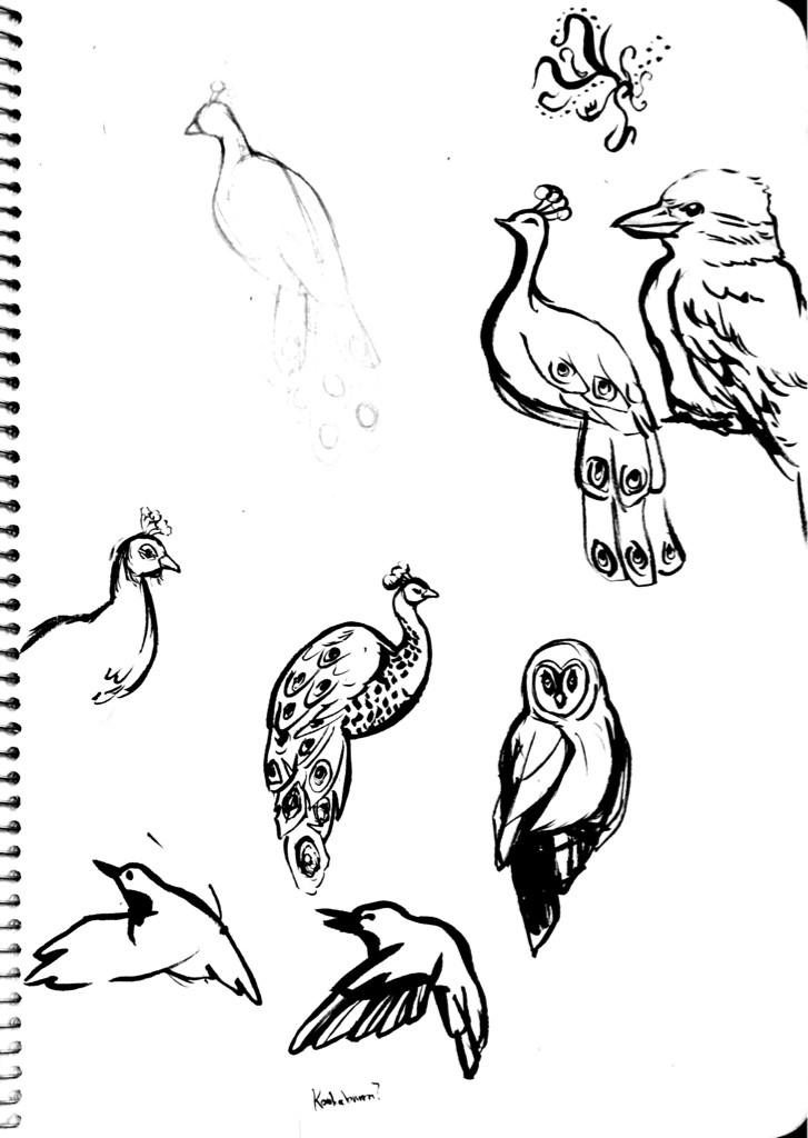 20150819birds